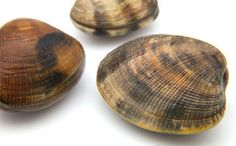 Scientists Killed the World's Oldest Creature - and Then it Got Older.  Rather than being 400 years old, it is closer to 507 years old.  The Arctica islandica bivalve mollusk was named Ming as it was born during the Ming dynasty.