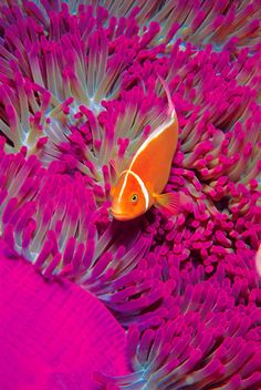 The most beautiful color combination ever, orange and pink! Coral Reef in Hayman Islands