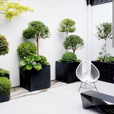 Simple design. Container Gardening, Organic Gardening, Modern, Plants, Balcony Garden, Plant, Planets