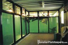 Monster Aquarium