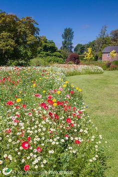 A drift of wild flowers in June sunshine at Ness Botanic Gardens, Cheshire