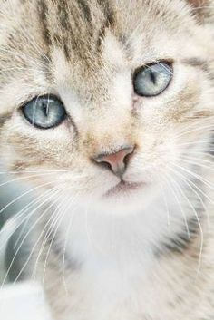 Top 25 Funny animals about Cats Animals And Pets, Baby Animals, Funny Animals, Cute Animals, Funny Cats, Pretty Cats, Beautiful Cats, Animals Beautiful, Pretty Kitty