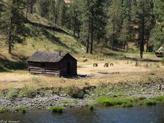 Cabin at the ghost town of Ritter Oregon
