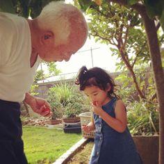 途中、おじいちゃんおばあちゃんの家へ寄る。  おじいちゃんの育ててる苺を頬張る♪「おいじっ!」。 - @kayoringco- #webstagram