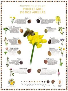 Plants that bees love Neals Yard Remedies, Bee Friendly, Save The Bees, Back Gardens, Permaculture, Bee Keeping, Flower Seeds, Science And Nature, Garden Planning
