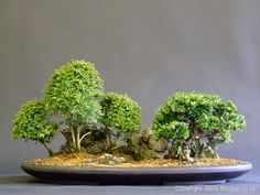 ~ Saikei ~ Bonsai ~ Bonsai / Saikei More Pins Like This At FOSTERGINGER @ Pinterest ㊙️㊗️