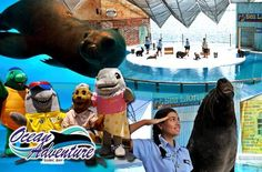 Experience the Marine Life with Day Pass Entrance Tickets to Ocean Adventure in Subic Starting at P320 instead of P440! Experience unique water entertainment at Ocean Adventure with this amazing deal only here at www.MetroDeal.com! #OceanAdventure #MetroDeal