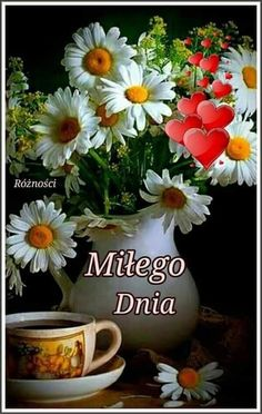 Plants, Love Of God, Messages, Boas, Good Day, Good Afternoon, Flowers, Plant, Planting
