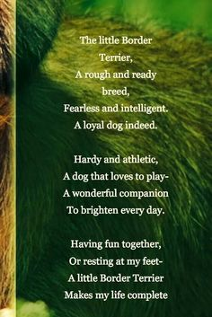 My lil Scruffy certainly does complete my life right now! Border Terrier, Best Dog Breeds, Best Dogs, New Puppy, Puppy Love, I Love Dogs, Cute Dogs, Cute Dog Quotes, Dog Sayings