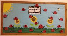 ladybug bulletin boards | Ladybug bulletin board!
