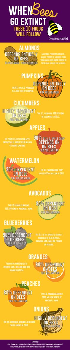 When Bees Go Extinct, These 10 Foods Will Follow [INFOGRAPHIC]