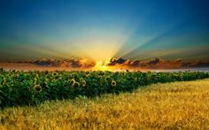 Sunrise above the sunflower field wallpaper Sunrise Wallpaper, Field Wallpaper, Nature Wallpaper, Hd Wallpaper, Wallpaper Pictures, Desktop Wallpapers, Inspirational Backgrounds, Backgrounds Free, Beautiful Landscape Wallpaper