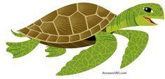 Sea Turtle VBS