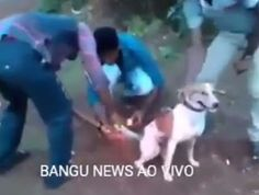 """O Grito do Bicho"": URGENTE: Garotos amarram bombas no rabo do cachorr..."