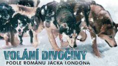 Volání divočiny | český dabing Husky, Dogs, Youtube, Animals, Animales, Animaux, Doggies, Animais, Husky Dog