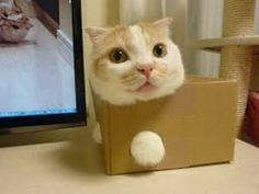 I Told You I could Fit in Here