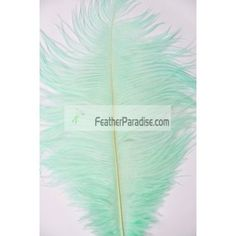 Mint Green Ostrich Feathers Wholesale by dozen or in bulk 12-14 inch 100 Pieces For Wedding Centerpieces and Crafts DIY