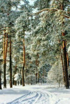 Snow Scenes, Winter Scenes, Winter Photography, Nature Photography, Travel Photography, Full Moon Pictures, Winter Is Here, Winter Snow, Winter Painting
