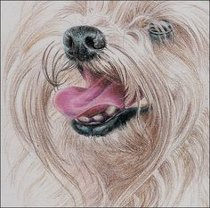 ~Pencil how-to. Long haired dog~