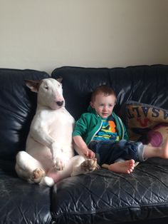 My 2 year old son Steven and our English bull terrier Henrik watching the telly together!