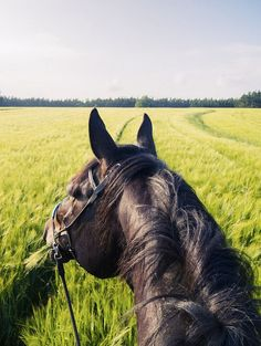 Pretty picture... then look at horses mouth... grass....