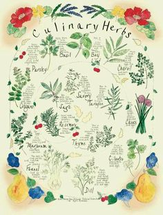 Culinary Herbs- bulletin board idea; I am thinking that I would like to go to culinary school, learn how to make some really cool dishes and possibly open a restaurant one day :)