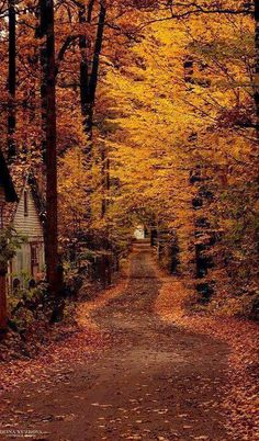 Country road covered with beautiful fall foliage. Forest Scenery, Forest Landscape, Fall Landscape, Forest Path, Forest Road, Tree Forest, Autumn Scenes, Autumn Nature, Autumn Leaves