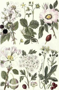 #botanical print | J. N Fitch - British Wildflowers in Their Natural Haunts