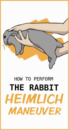 Choking in rabbits is also rare, since they do not often breathe through their mouths, but it is possible. In an extreme emergency, when your rabbit is not breathing and you only have a few minutes to save their life, there is the bunny Heimlich maneuver. Rabbit Farm, Pet Rabbit, House Rabbit, Lionhead Rabbit, Rabbit Garden, Pet Bunny Rabbits, Baby Bunnies, Hunny Bunny, Cute Bunny
