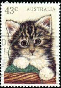 Kitten, Australia