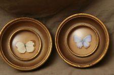 Vintage Framed Butterfly Sungott Art Studios Tropical Jungle Specimens