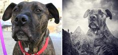 Tanya (a very special dog) - Sarolta ban, a talented Hungarian photographer, takes beautiful surreal images of loving shelter dogs looking for a home.  Tanya has been homeless her whole life, 7 1/2 years.
