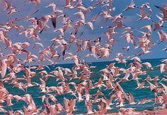 Creative Abstract, Pantones, and Flamingos image ideas & inspiration on Designspiration Disney Instagram, Instagram Girls, Landscape Illustration, Illustration Art, Creation Art, Am Meer, It Goes On, Jolie Photo, Pink Flamingos