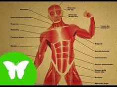 La Eduteca - El esqueleto - YouTube