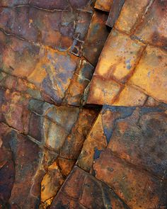 oil shale fossils - Google Search