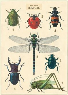 "Insect Chart Wrap - 20"" x 28"" sheet"
