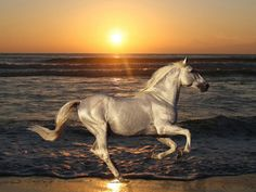 """This is a very rare breed called """"Akal Teke"""" known for it's endurance.  Aslo, called the shining horse."""