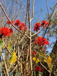#Flores vermelhas