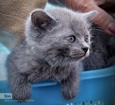 Kitten by feneek2010. Please Like http://fb.me/go4photos and Follow @go4fotos Thank You. :-)
