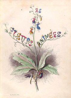 Les fleurs animées - Granville