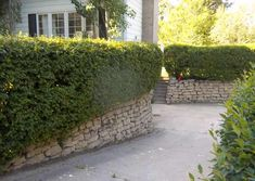 These stone retaining walls were built using reclaimed concrete. The hedges give this driveway and home added privacy. Using reclaimed materials is a great way to save money on materials for building walls, walkways, and paths.