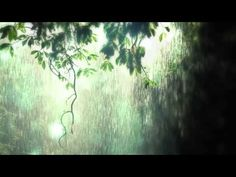 Rain Relaxation CD-Gentle Rain sounds for deep relaxation-Narellan Hypnotherapy Dream Word, My Dream, Jungle Sounds, Forest Sunset, Rain Go Away, Sound Of Rain, Nature Music, Rain Storm, Spring Shower