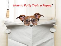 How to Potty Train a Puppy? How to potty train a puppy? Tips for house training your puppy. Ways for potty training a puppy. Way to houstrain your puppy or dog.