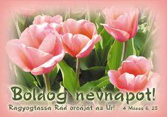 virágok névnapra - Google keresés Name Day, Diy Cards, Greeting Cards, Rose, Birthday, Happy, Flowers, Plants, Google