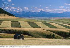 Strip farming, Southern Alberta
