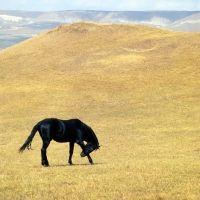 Kabardine stallion in Caucasus mountains