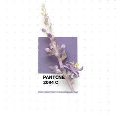 Pantone 2094 color match. Blue Lilyturf flowers. Although I think it's more like purple They have this lovely delicate sweet scent.
