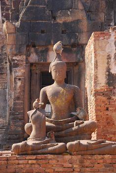 In #Ayutthaya kun je ook volop aapjes spotten #Thailand