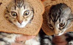 Cat In Bread Box 350 Best Cat Breading Images On Pinterest  Breads Bread And