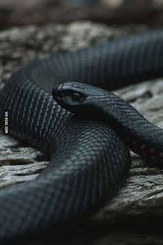 Just a beautiful snake...